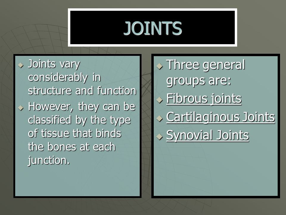 JOINTS Three general groups are: Fibrous joints Cartilaginous Joints