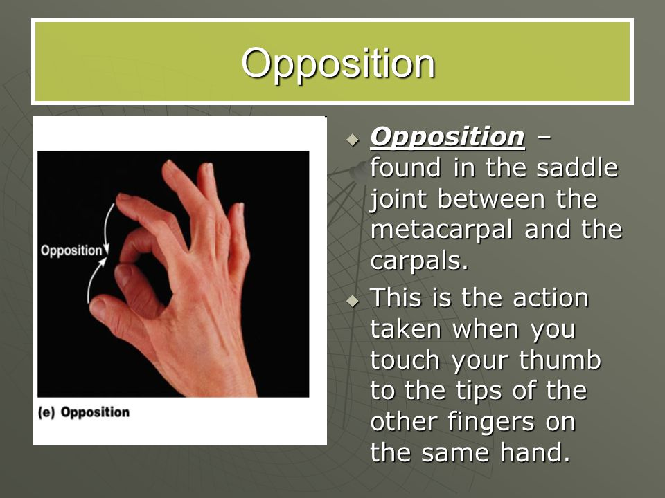 Opposition Opposition – found in the saddle joint between the metacarpal and the carpals.