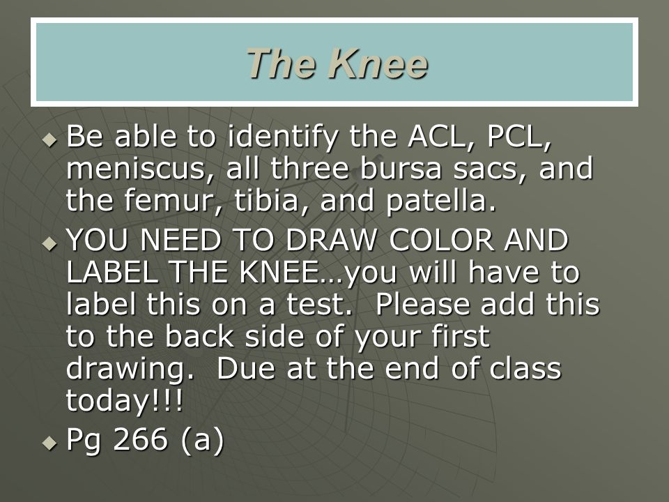 The Knee Be able to identify the ACL, PCL, meniscus, all three bursa sacs, and the femur, tibia, and patella.