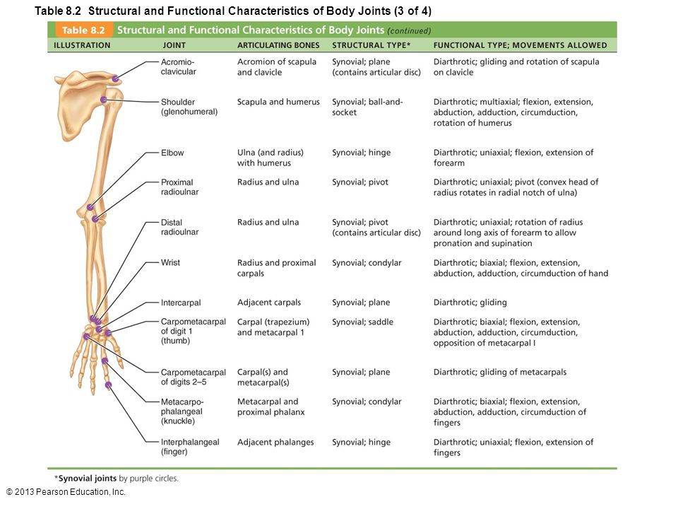 Table 8.2 Structural and Functional Characteristics of Body Joints (3 of 4)