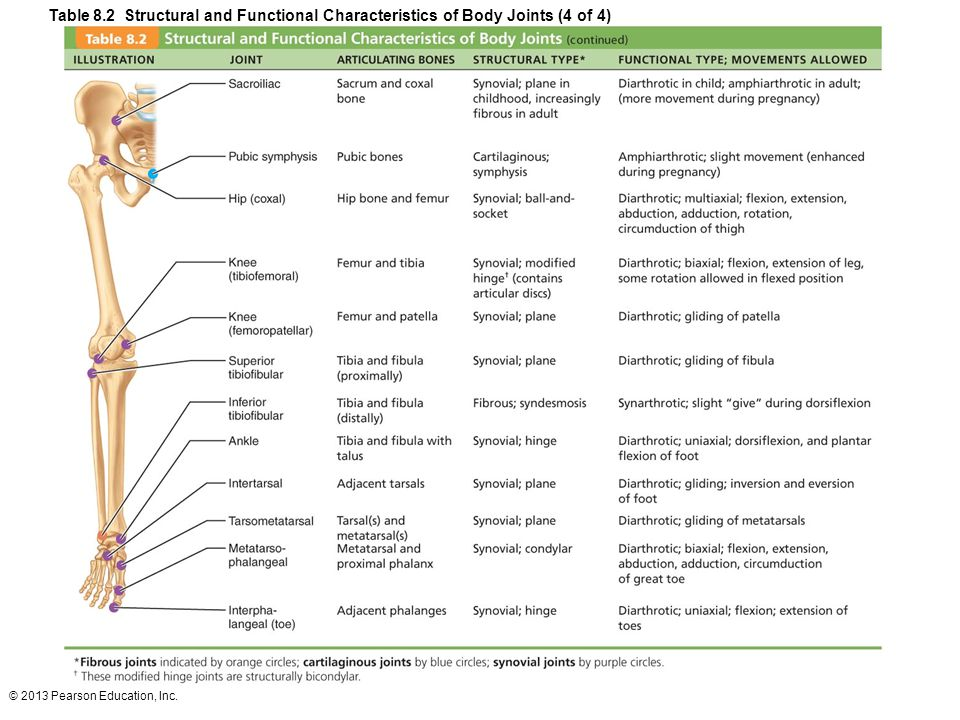 Table 8.2 Structural and Functional Characteristics of Body Joints (4 of 4)