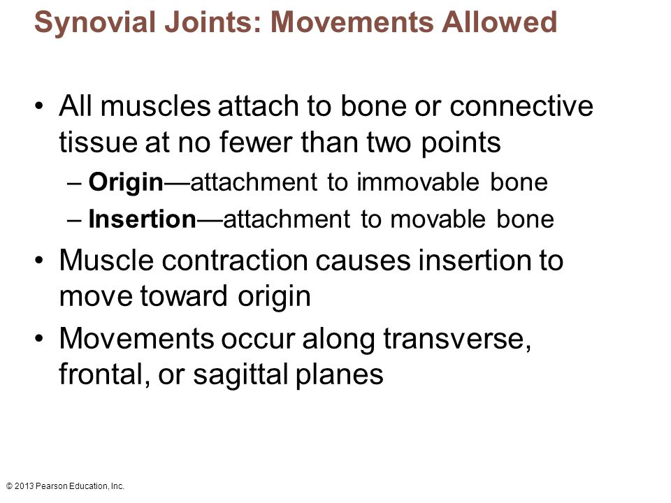 Synovial Joints: Movements Allowed