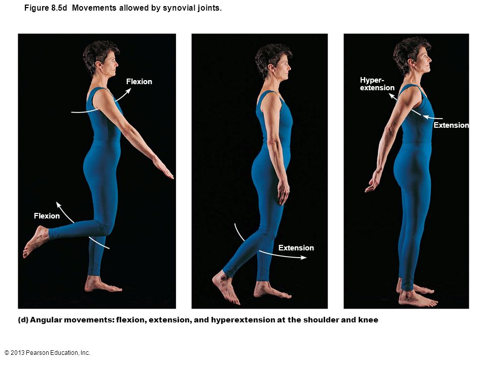 Figure 8.5d Movements allowed by synovial joints.