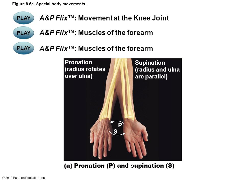 Pronation (P) and supination (S)