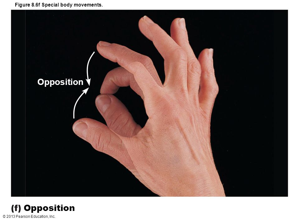 Opposition Opposition Figure 8.6f Special body movements.