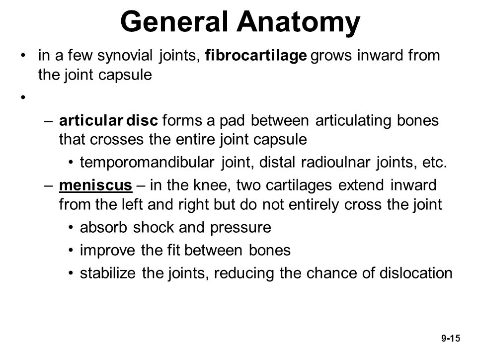 General Anatomy in a few synovial joints, fibrocartilage grows inward from the joint capsule.