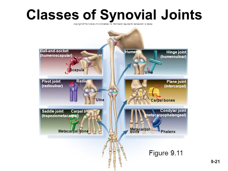 Classes of Synovial Joints