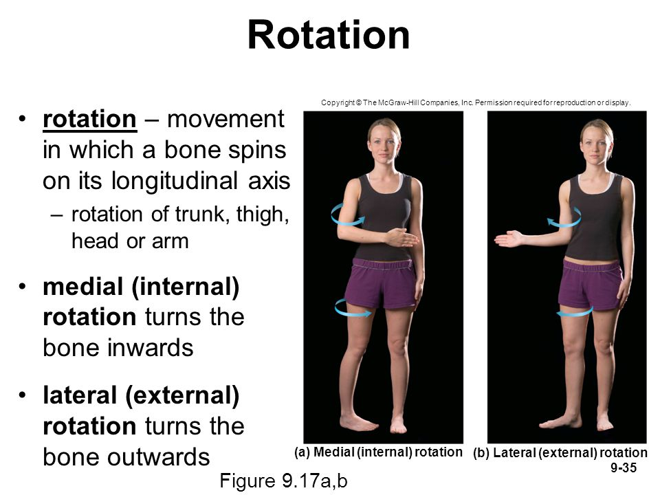 Rotation rotation – movement in which a bone spins on its longitudinal axis. rotation of trunk, thigh, head or arm.