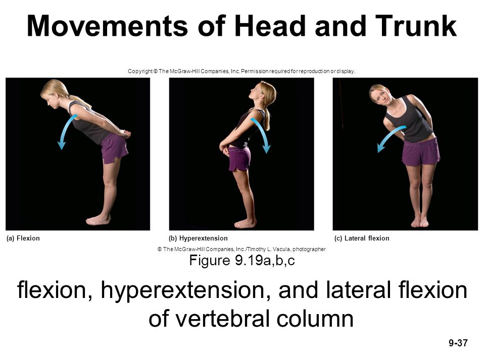 Movements of Head and Trunk