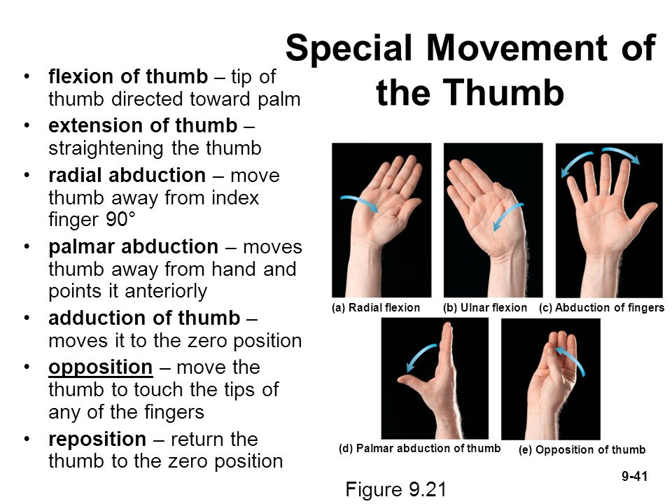 Special Movement of the Thumb