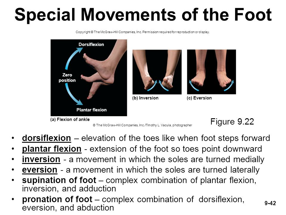 Special Movements of the Foot