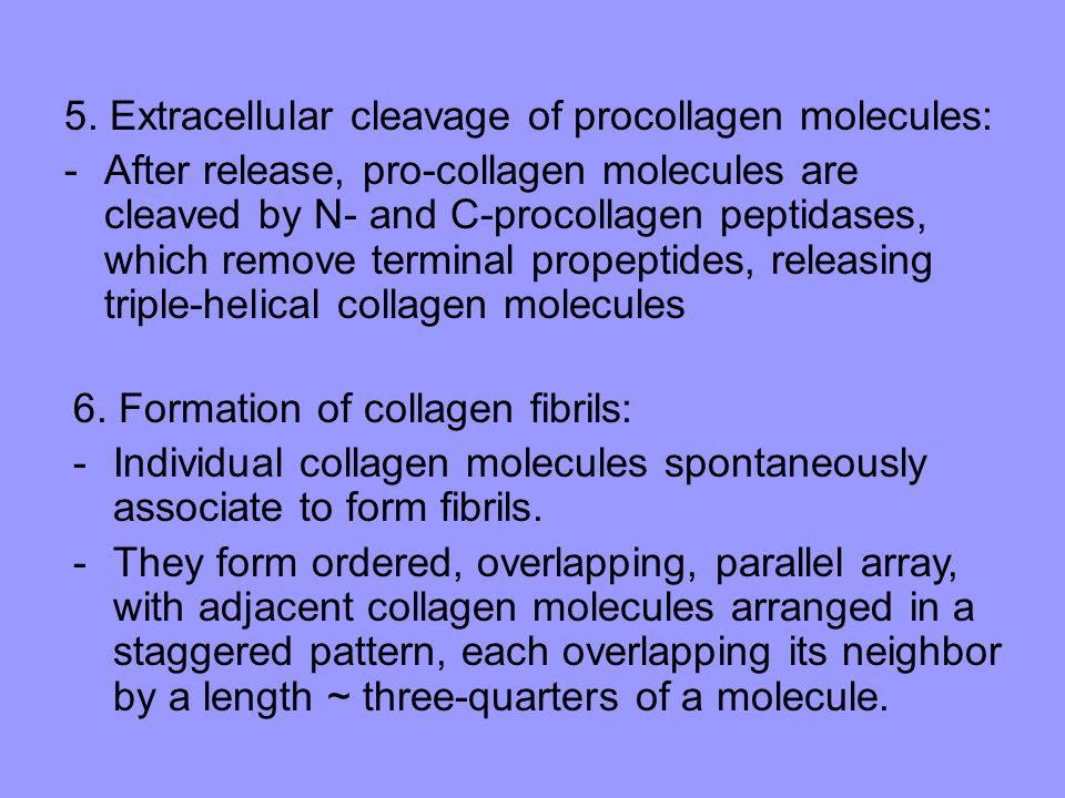 5. Extracellular cleavage of procollagen molecules: