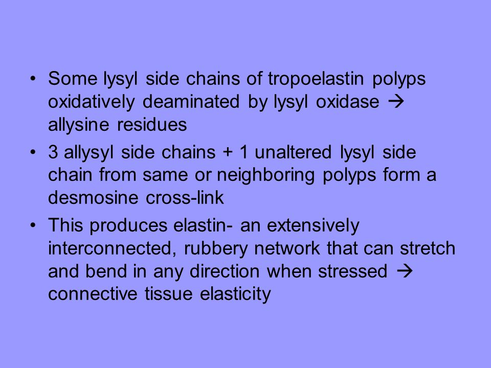 Some lysyl side chains of tropoelastin polyps oxidatively deaminated by lysyl oxidase  allysine residues