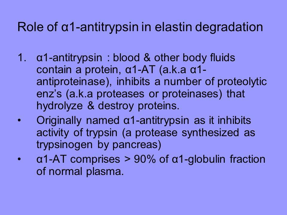 Role of α1-antitrypsin in elastin degradation