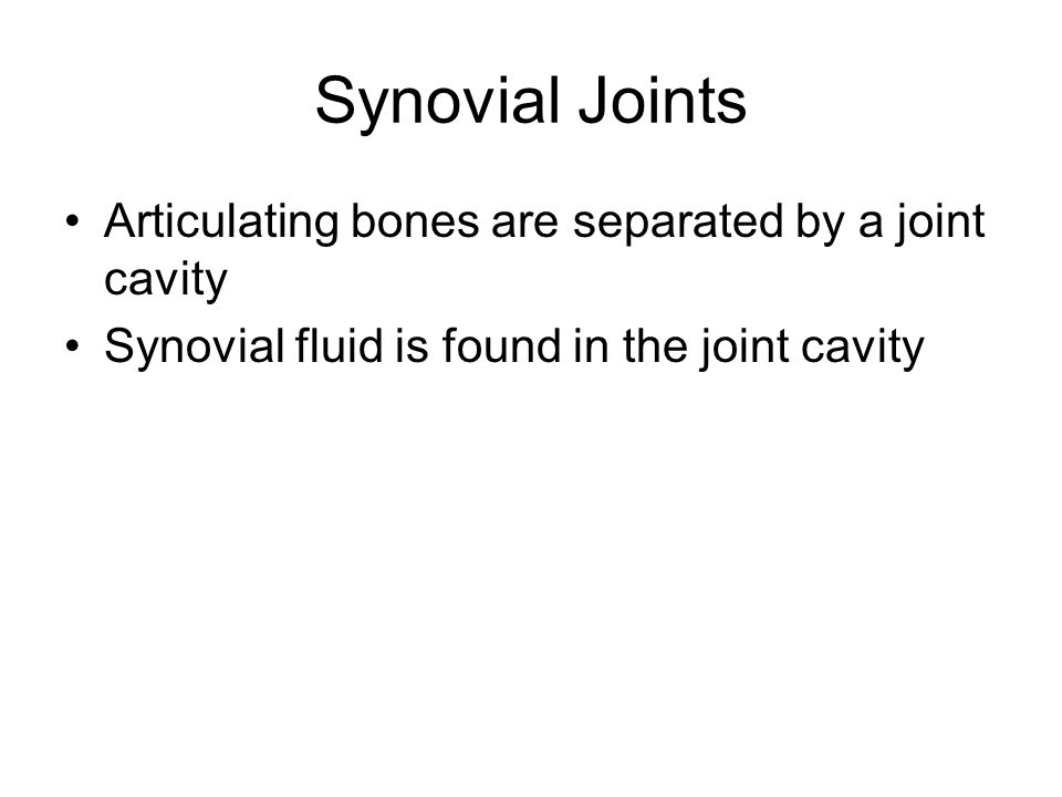 Synovial Joints Articulating bones are separated by a joint cavity