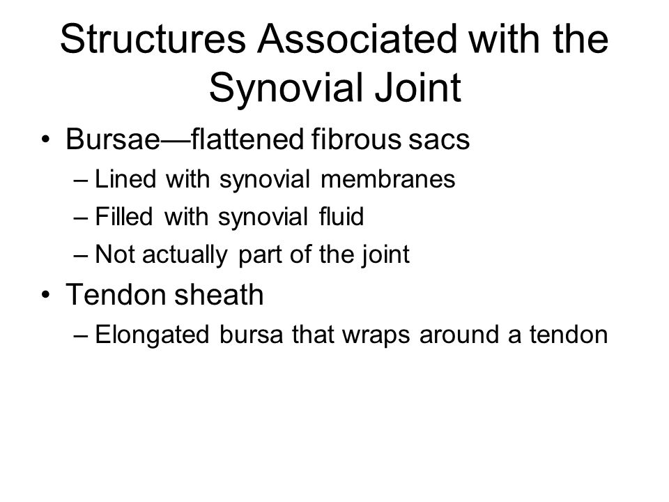 Structures Associated with the Synovial Joint