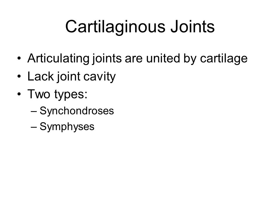 Cartilaginous Joints Articulating joints are united by cartilage