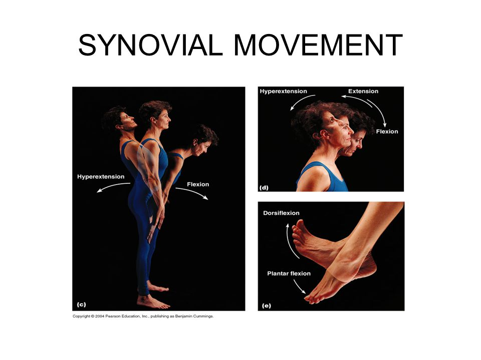 SYNOVIAL MOVEMENT