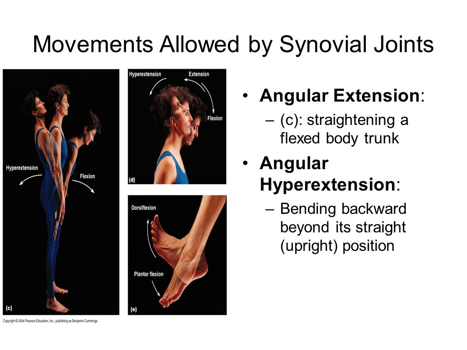 Movements Allowed by Synovial Joints