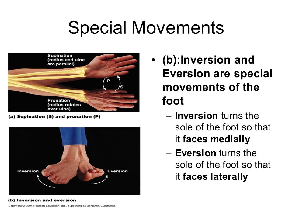 Special Movements (b):Inversion and Eversion are special movements of the foot. Inversion turns the sole of the foot so that it faces medially.