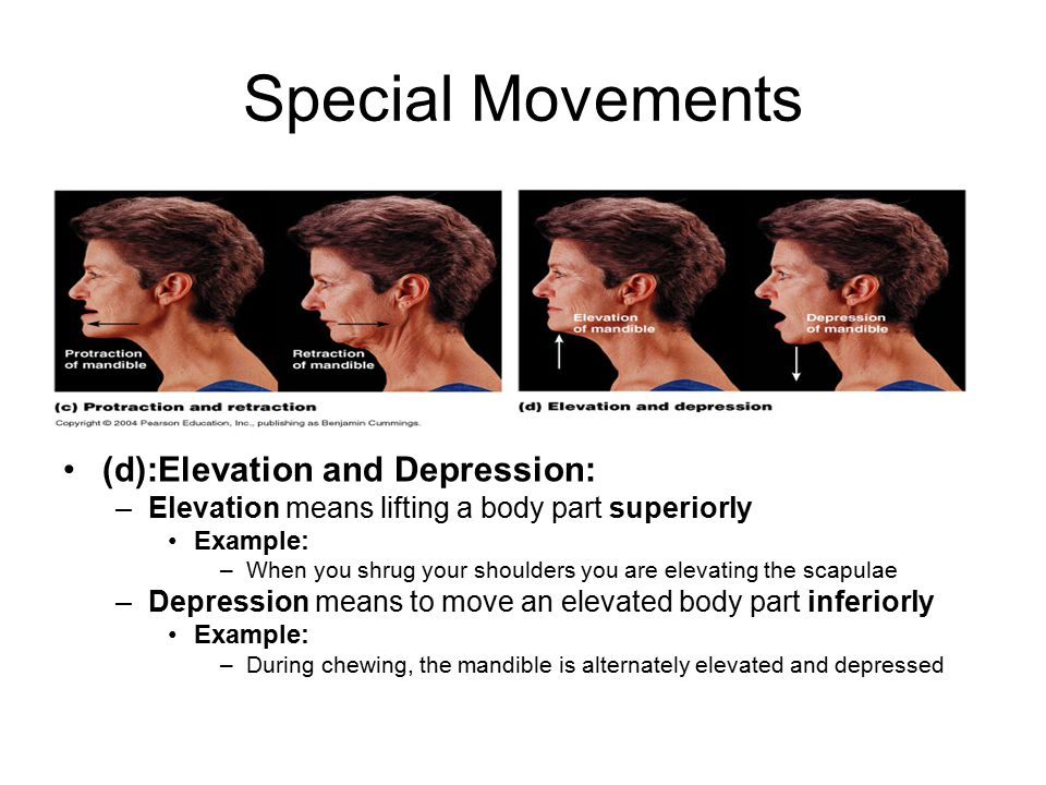 Special Movements (d):Elevation and Depression: