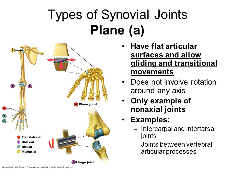 Types of Synovial Joints Plane (a)