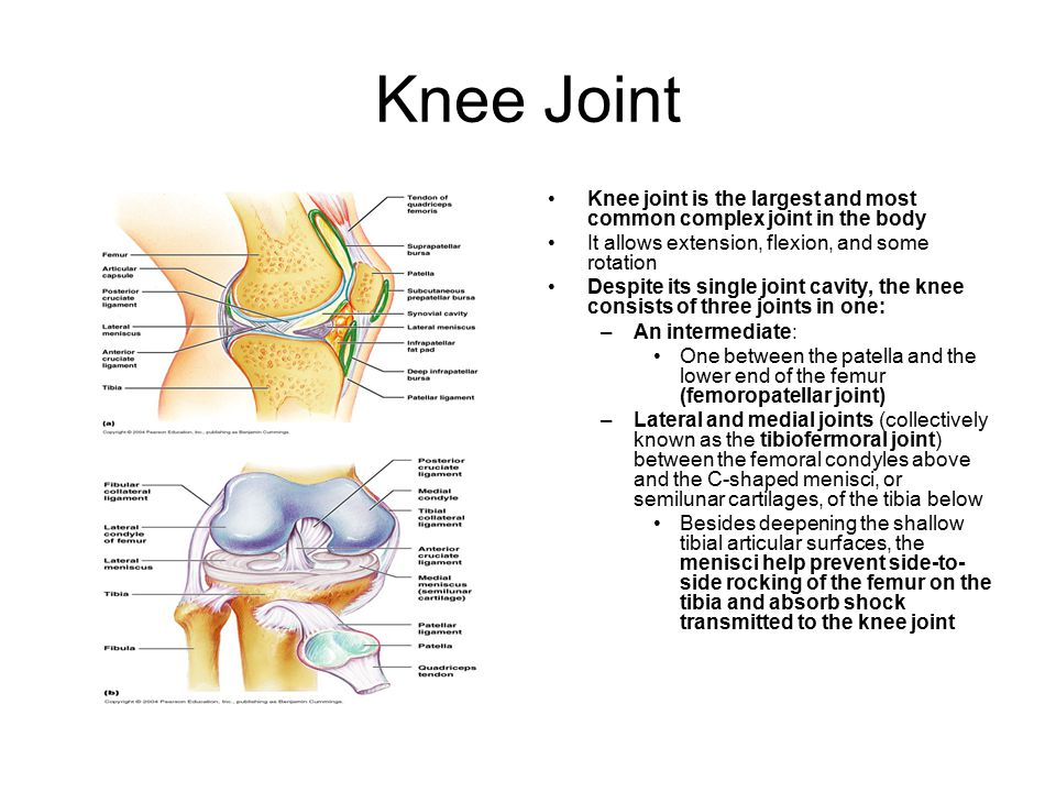Knee Joint Knee joint is the largest and most common complex joint in the body. It allows extension, flexion, and some rotation.