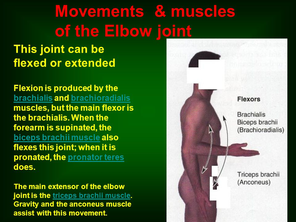 Movements & muscles of the Elbow joint