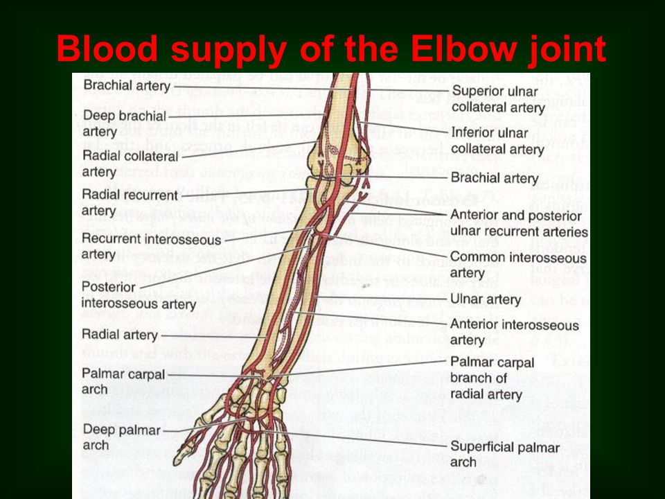 Blood supply of the Elbow joint