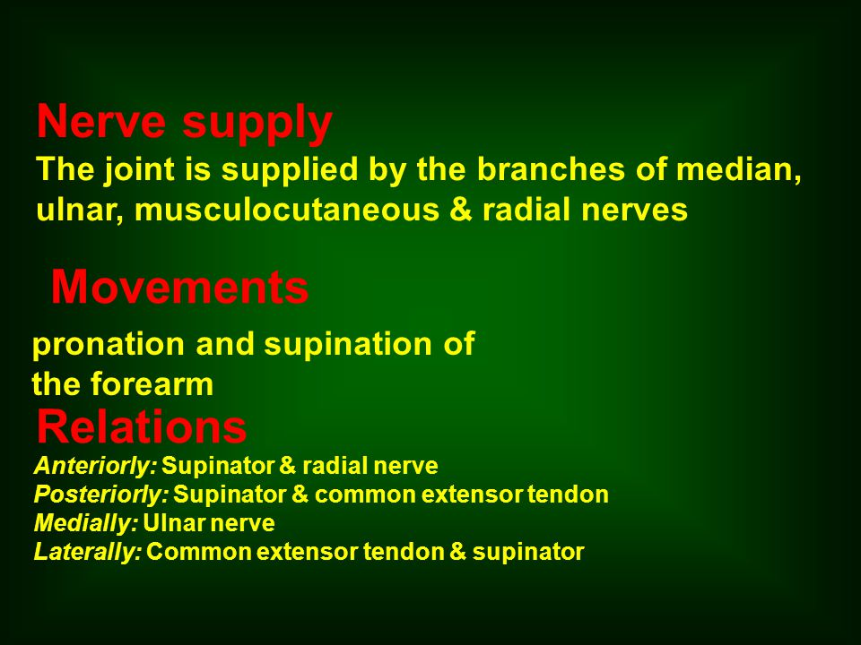 Nerve supply Movements Relations