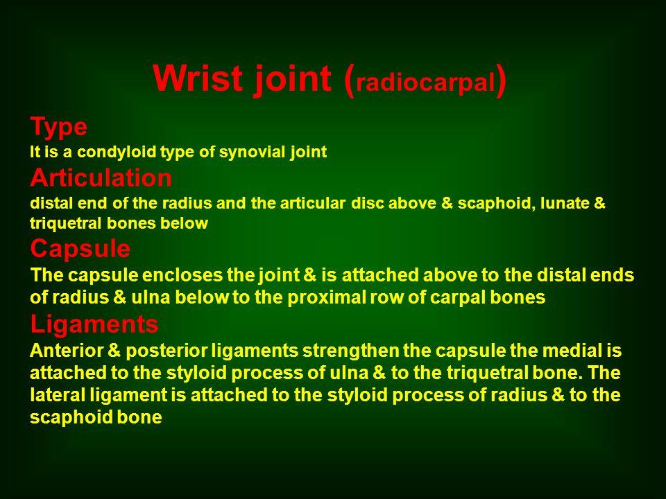 Wrist joint (radiocarpal)