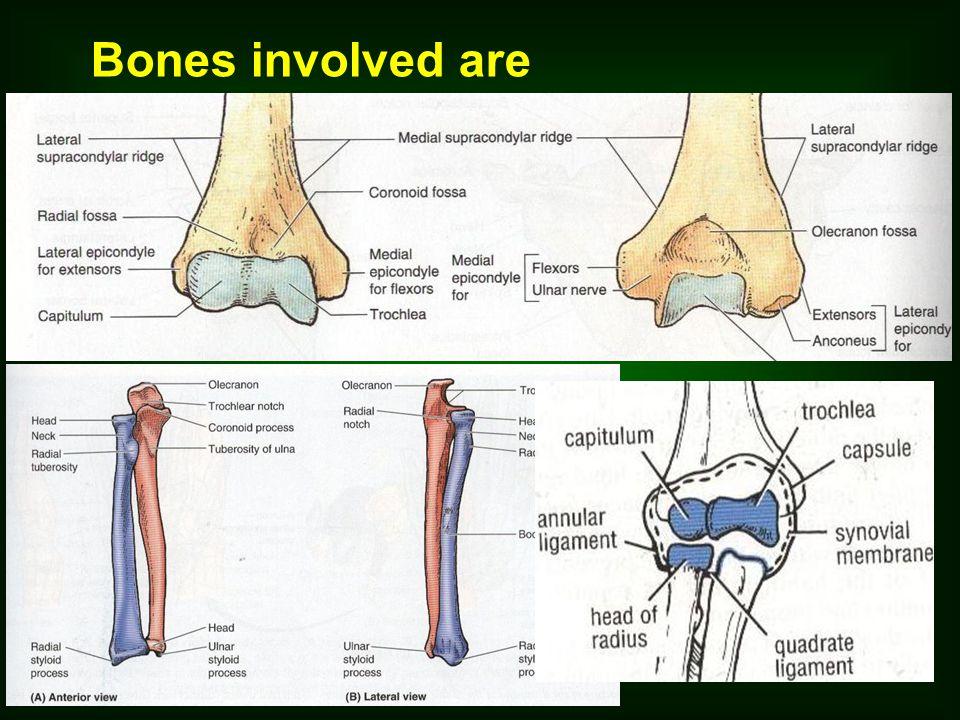 Bones involved are