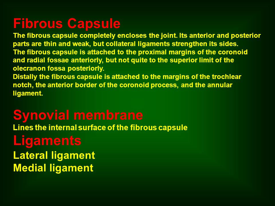 Fibrous Capsule Synovial membrane Ligaments Lateral ligament