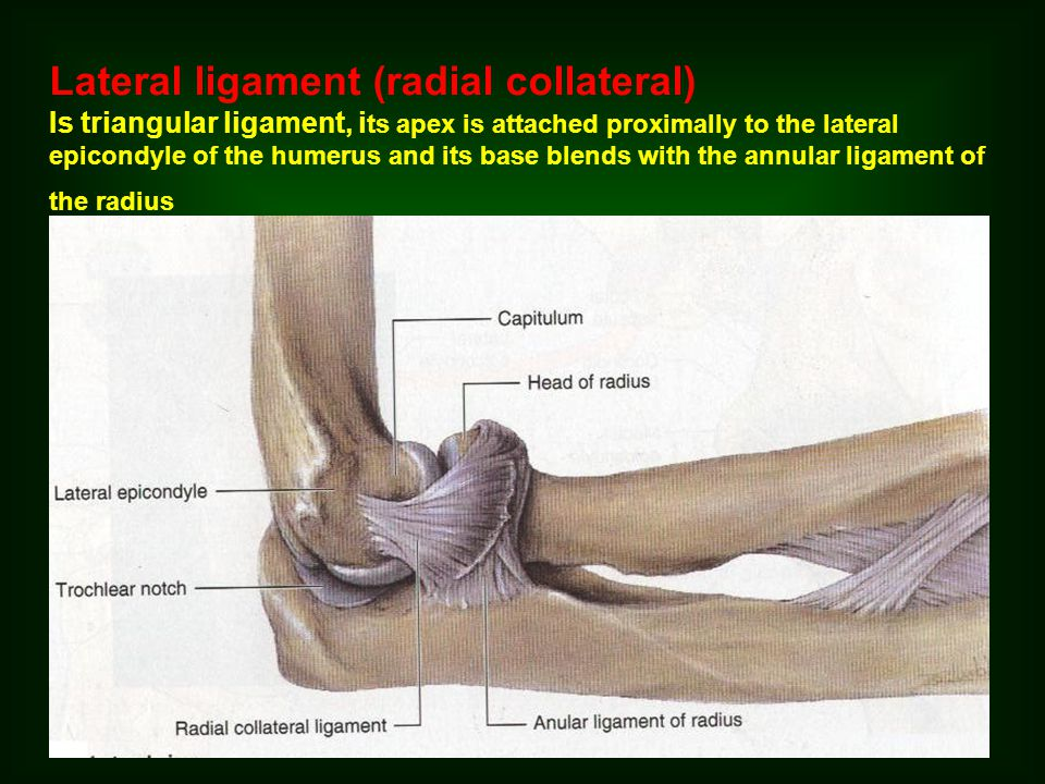 Lateral ligament (radial collateral)