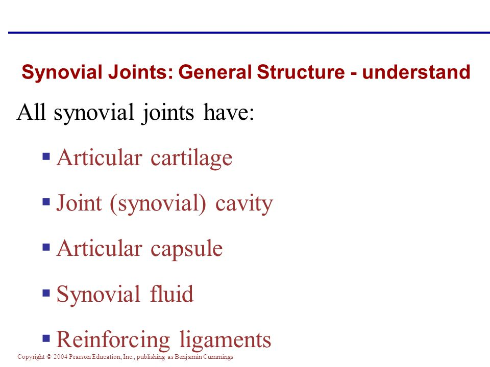 Synovial Joints: General Structure - understand