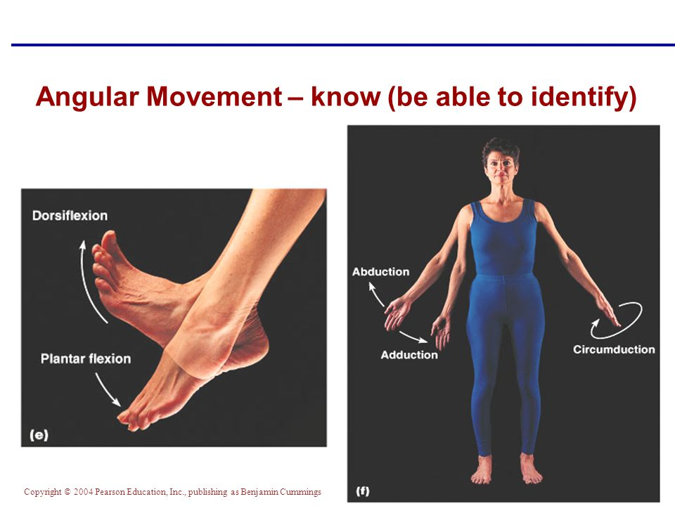 Angular Movement – know (be able to identify)