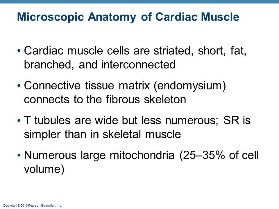 Microscopic Anatomy of Cardiac Muscle