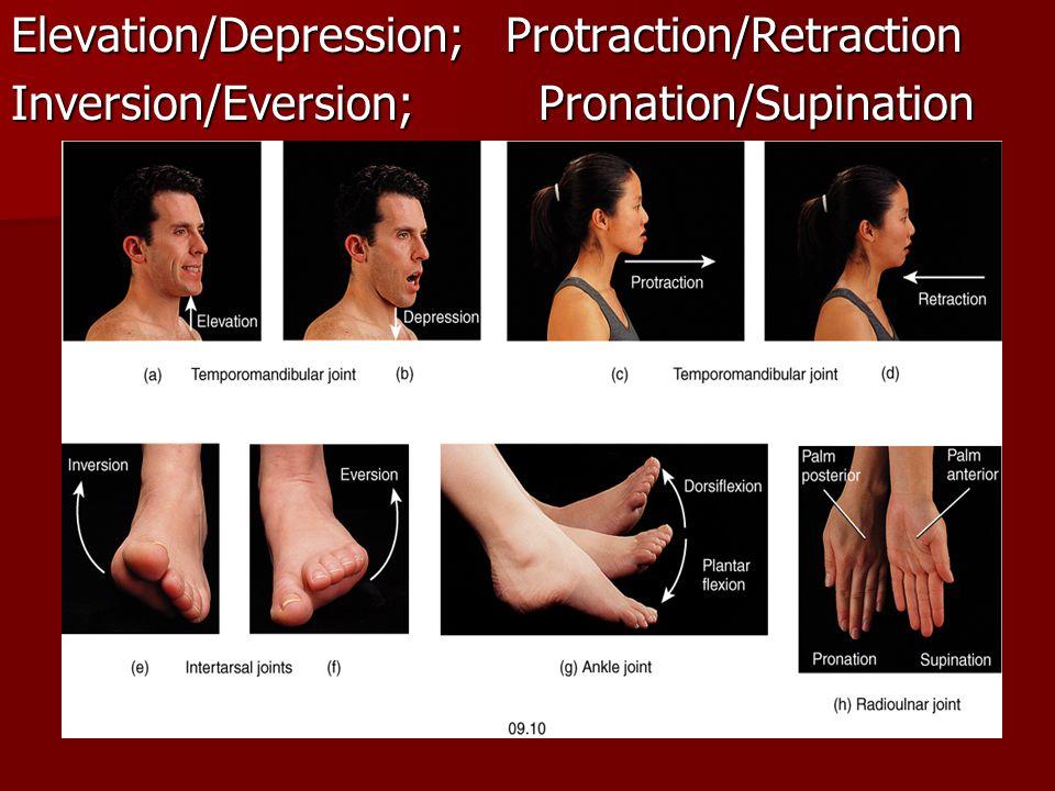 Elevation/Depression; Protraction/Retraction