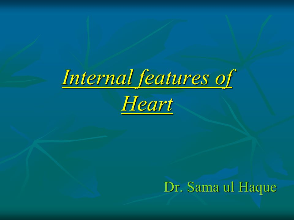 Internal features of Heart