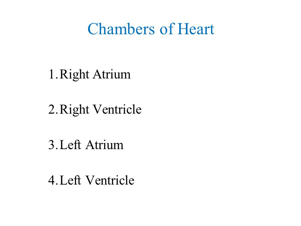 Chambers of Heart Right Atrium Right Ventricle Left Atrium