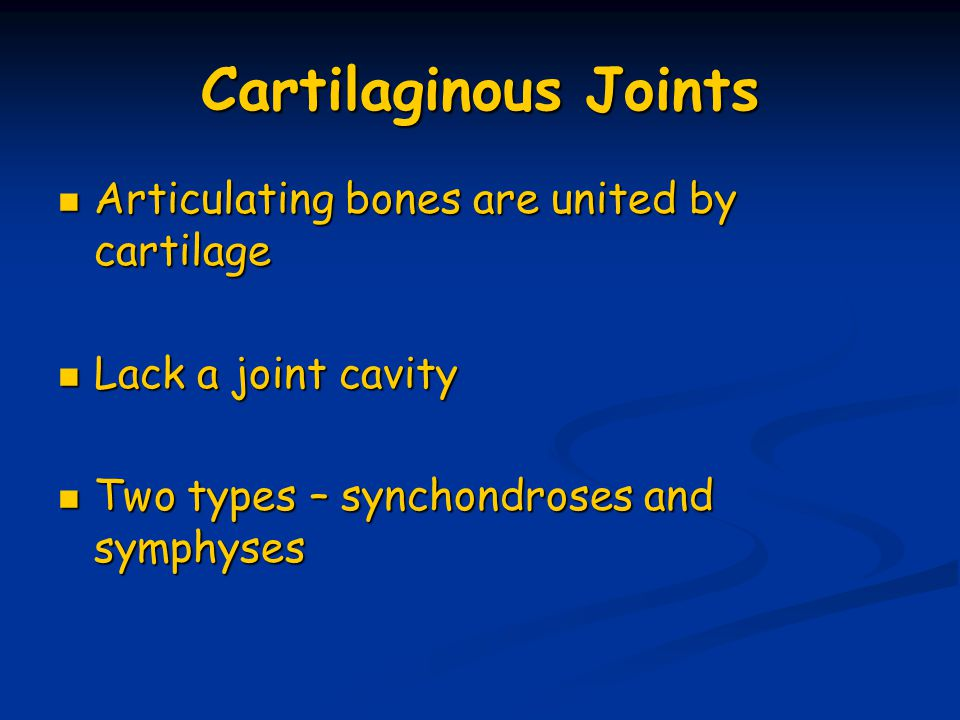 Cartilaginous Joints Articulating bones are united by cartilage