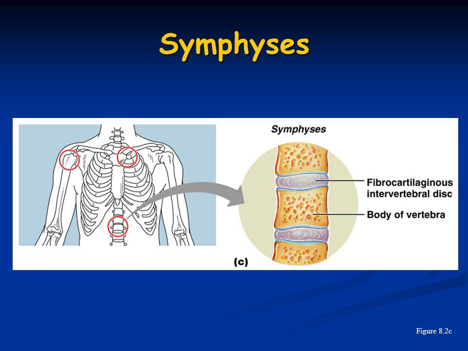 Symphyses Figure 8.2c