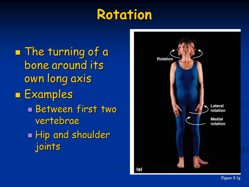 Rotation The turning of a bone around its own long axis Examples