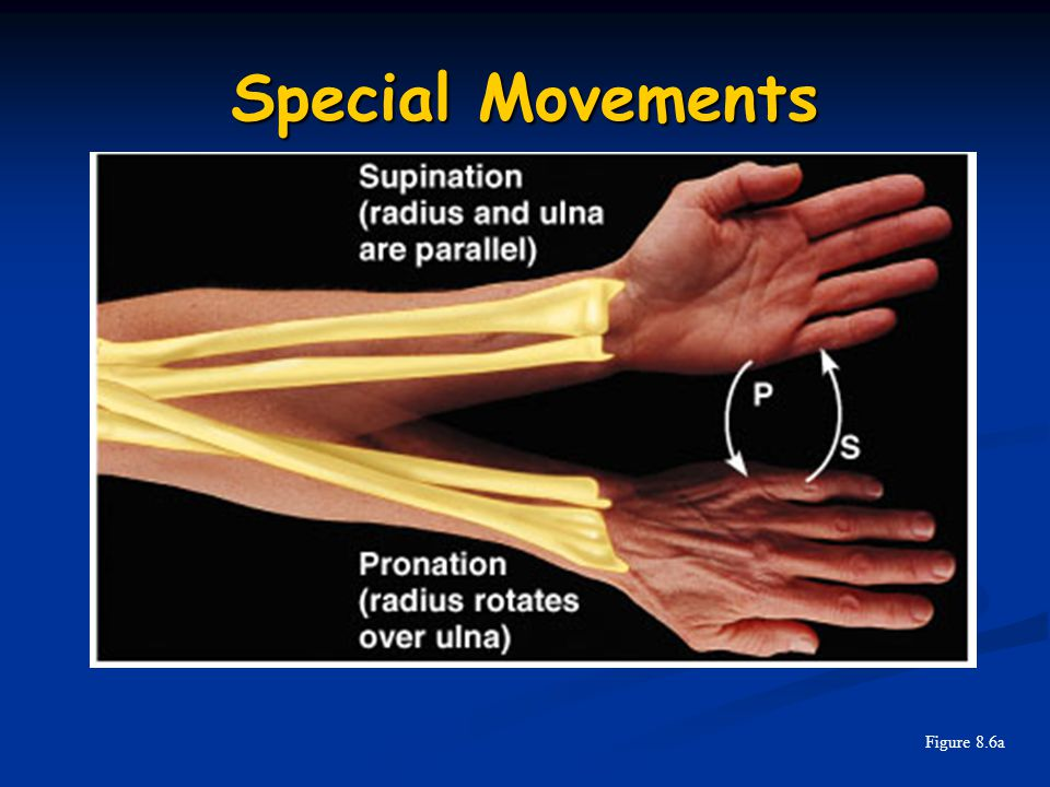 Special Movements Figure 8.6a