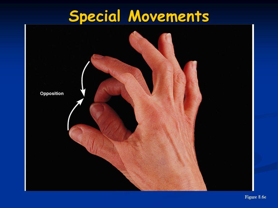 Special Movements Figure 8.6e