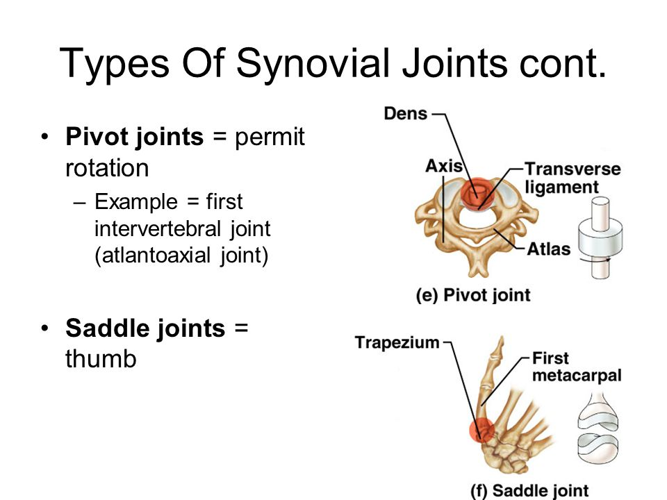 Types Of Synovial Joints cont.
