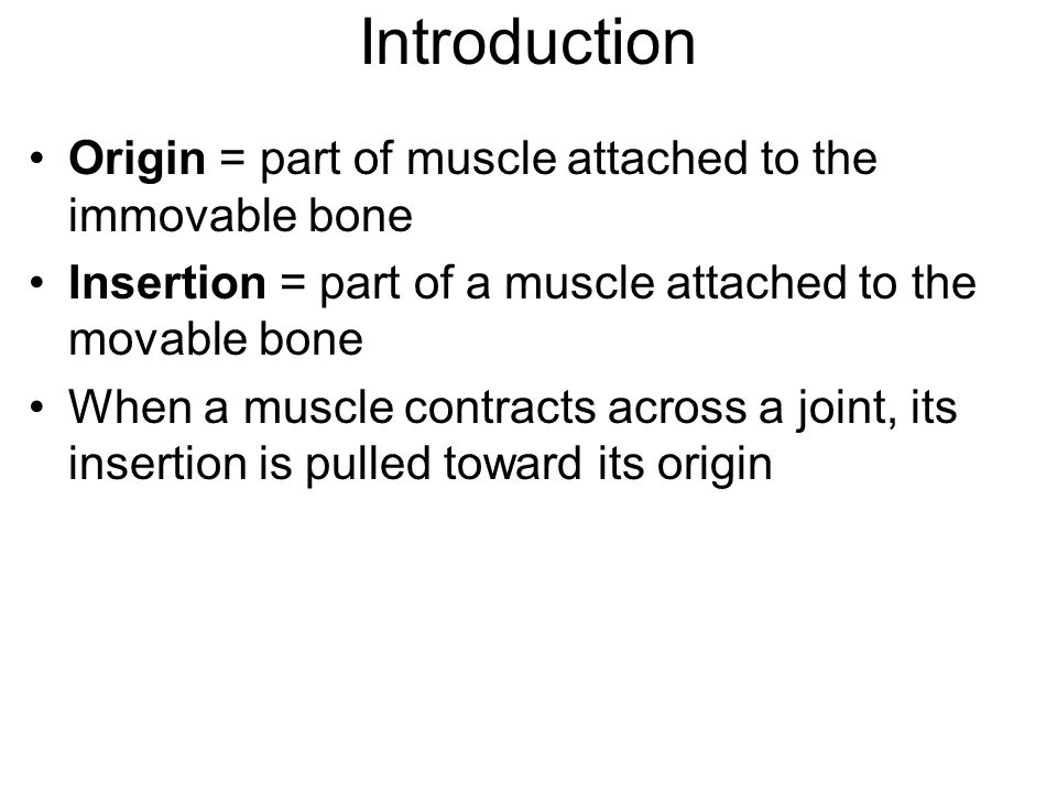 Introduction Origin = part of muscle attached to the immovable bone