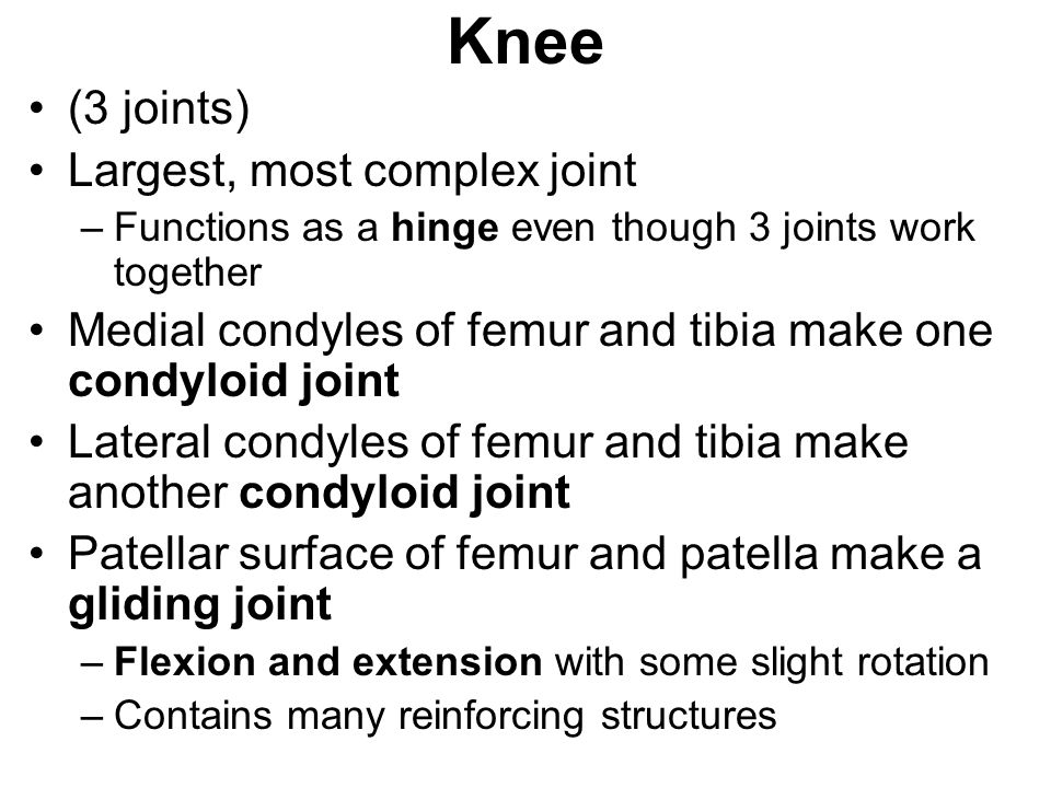 Knee (3 joints) Largest, most complex joint
