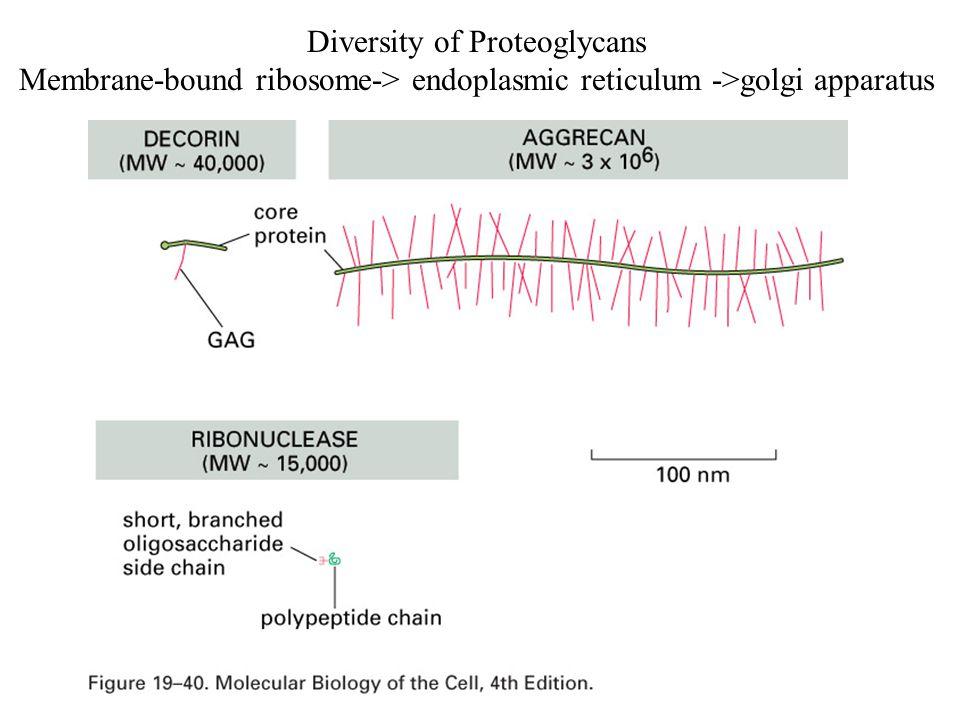 Diversity of Proteoglycans