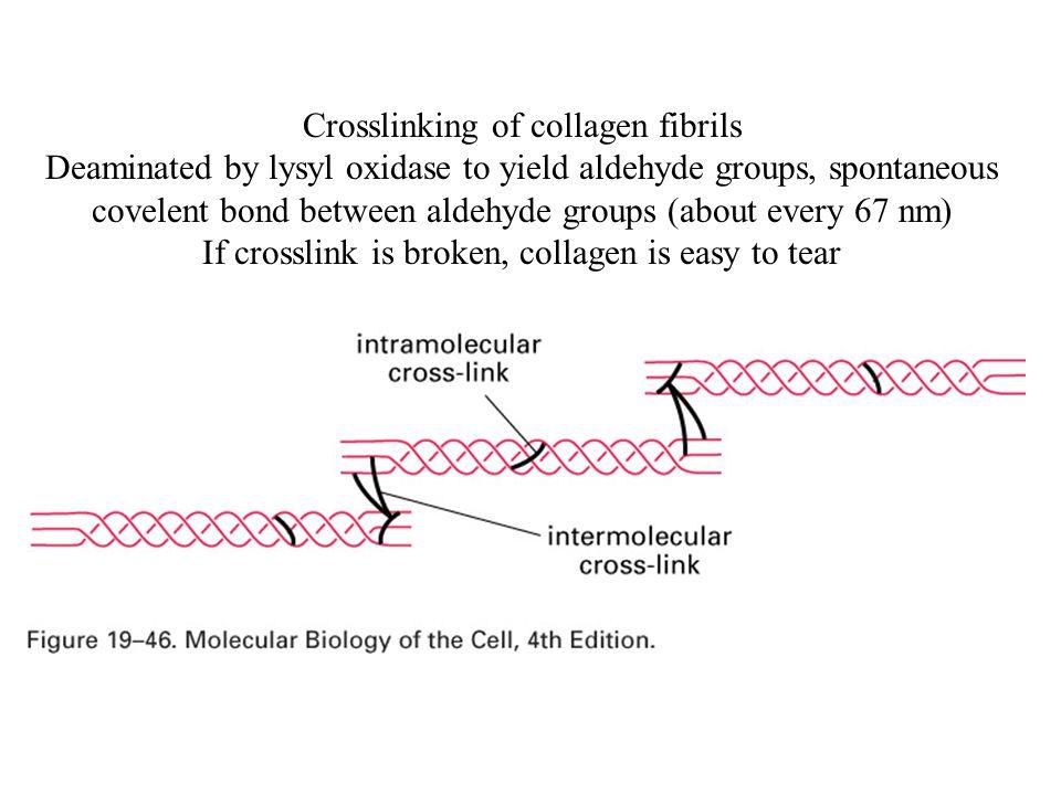 Crosslinking of collagen fibrils